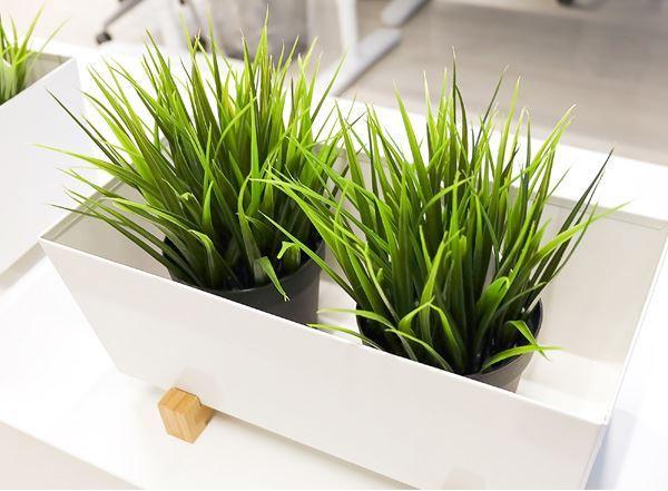 Imagen para la categoría Plantas Decorativas