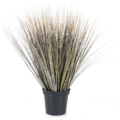 Picture of 30in Fall Onion Grass