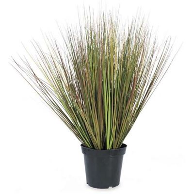 Picture of 36in Mix Green Onion Grass