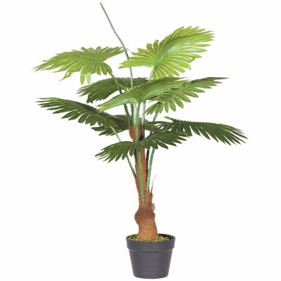 Picture of FAN PALM