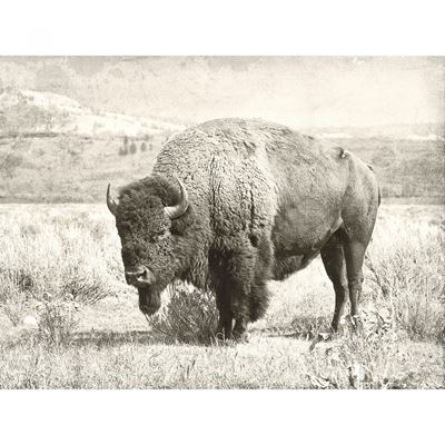 Picture of Buffalo Wall Decor