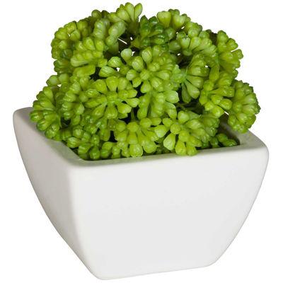 Picture of Round succulent in White Ceram