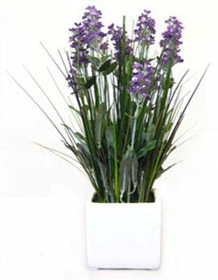 Imagen de Lavender in White Ceramic Pot