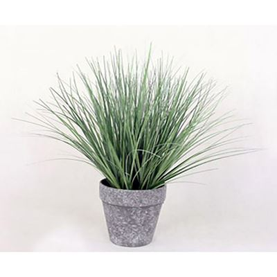 Imagen de Onion Grass In Black/White Pot