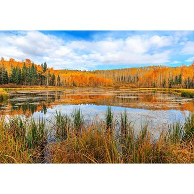 Woods Lake Reflection 32x48