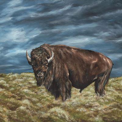 Lone Buffalo 36x36