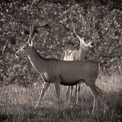 The Young Bucks 24x24