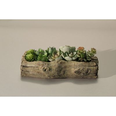Picture of Succulents In Cement Log