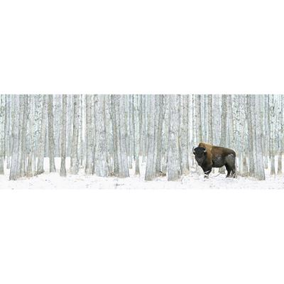 Imagen de Buffalo in Trees Canvas 36x12