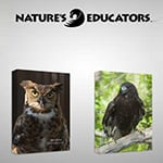 Natures Educators Birds