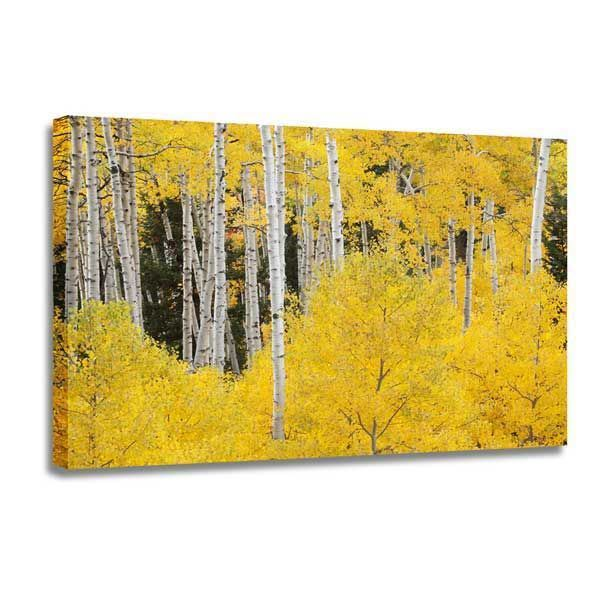 Picture of Aspens In The Colorado Rockies 48x32 *D