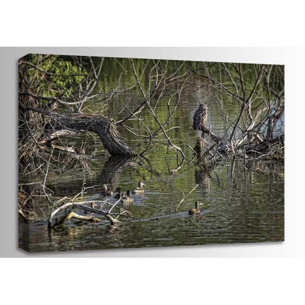 Picture of Great Horned Owl And Mallards 36x24 *D