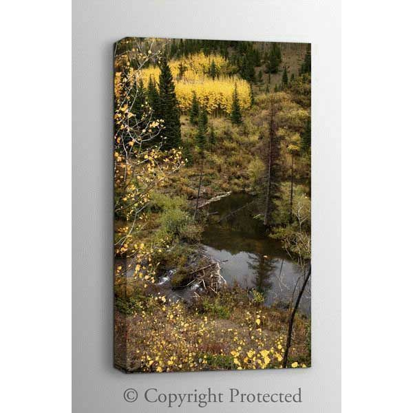 Picture of Fall in the Colorado Rockies 24x36 *D