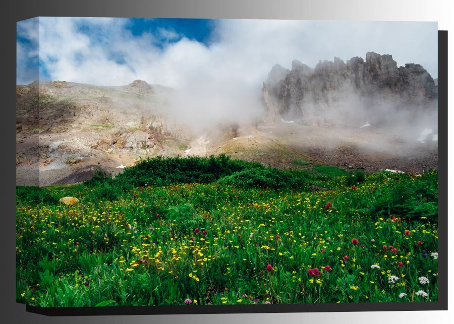Picture of Wildflowers on Imogene Pass 36x24 *D
