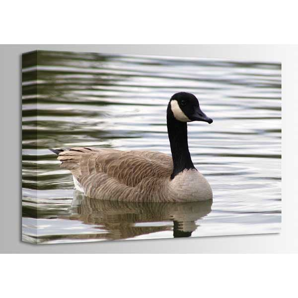 Picture of Grand Goose 24x16 *D