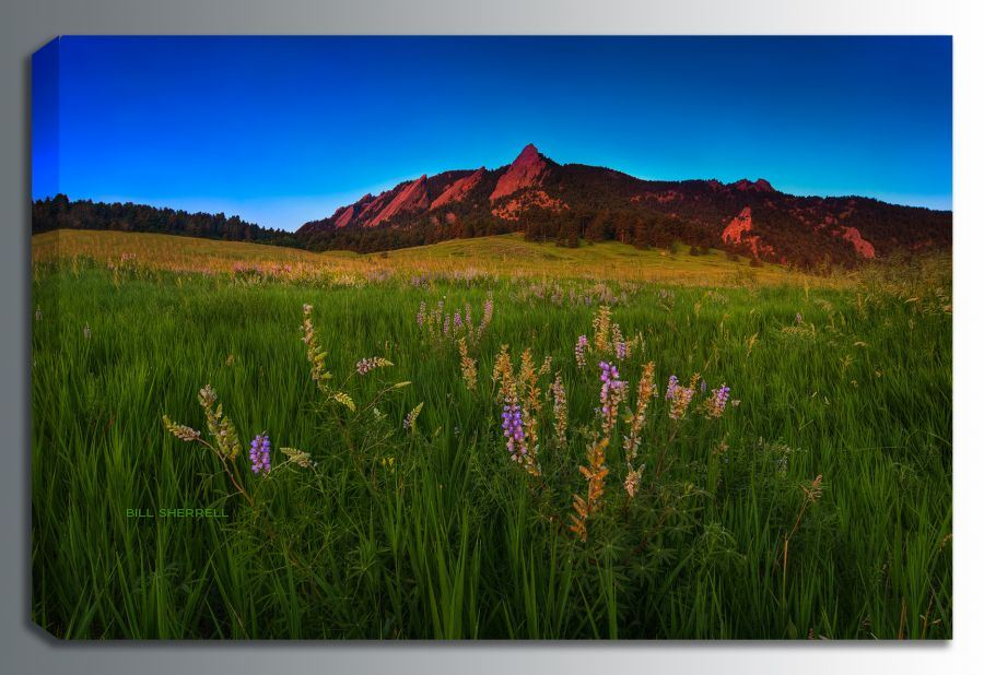Picture of Glowing Flatirons Wildflowers 48x32 *D