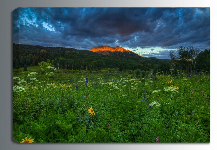 Picture of Wildflowers Mountain Majesty 36x24 *D