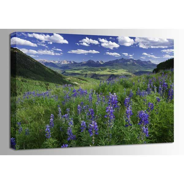 Picture of Last Dollar Lupine 48x32 *D