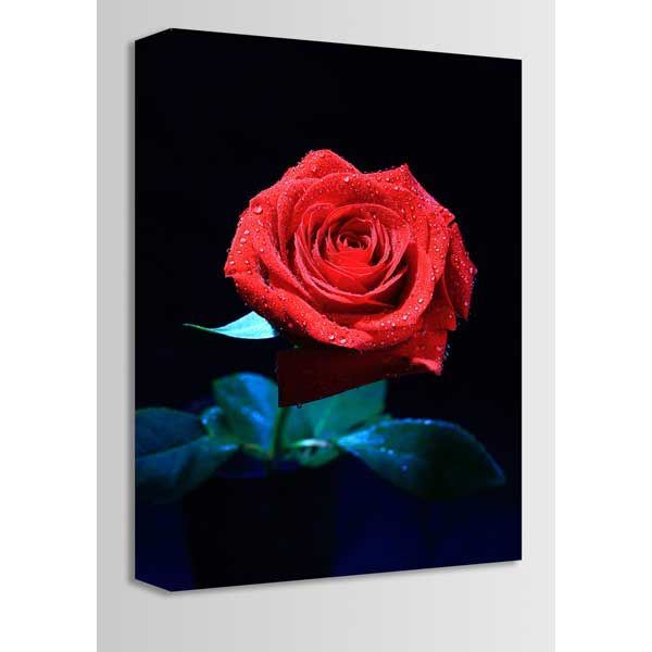 Picture of The Rose 16x24 *D