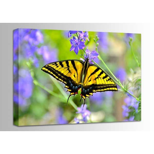 Picture of Swallowtail Butterfly 24x16 *D
