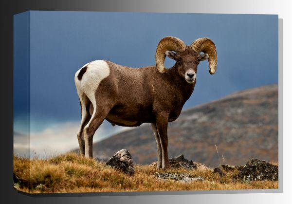 Picture of Rocky Mountain Wild 36x24 *D