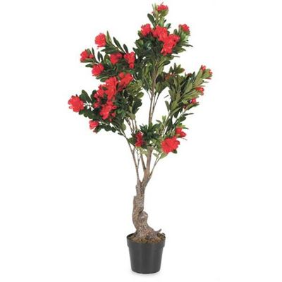 Picture of 6 FT RHODODENDRON PLANT
