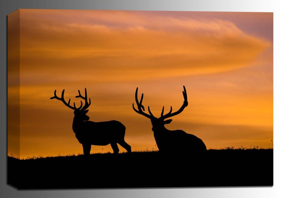 Picture of Estes Elk 16x24 *D