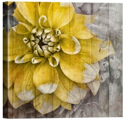 Picture of Joy 1 Flower Canvas Giclee