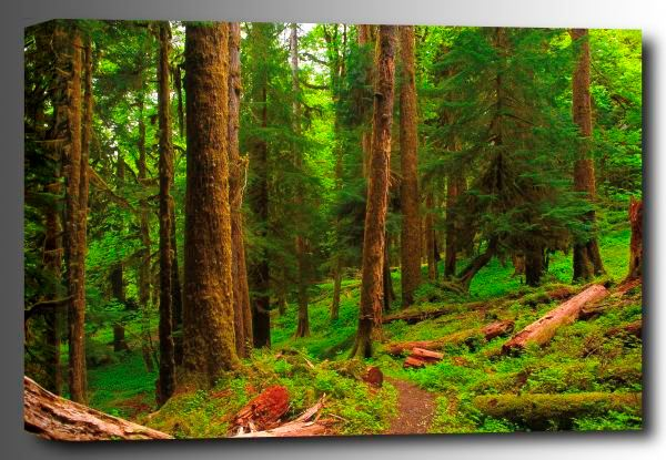 Picture of Spring in the Quinault Rainforest 48x32 *D