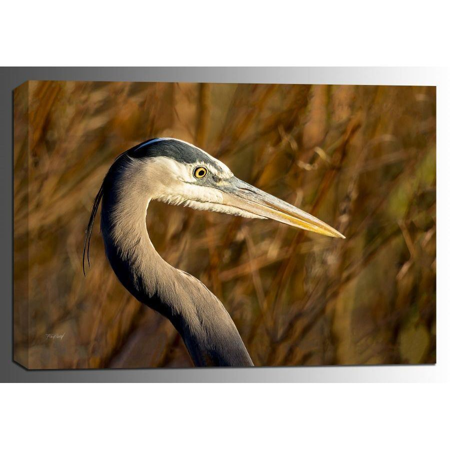 Picture of Great Blue Heron 16x24 *D