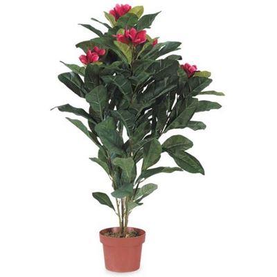 Picture of Plumeria Tree