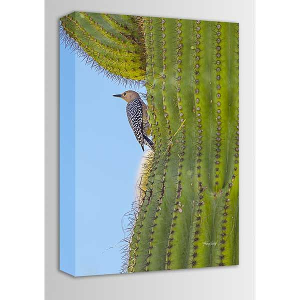Picture of Woodpecker Guarding Her Nest 16x24 *D
