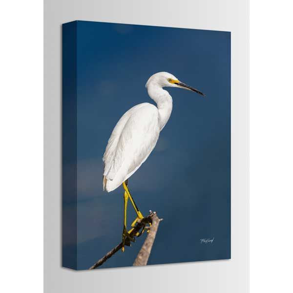 Picture of Snowy Egret 16x24 *D