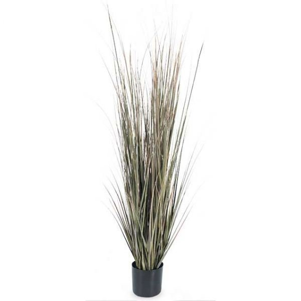 Picture of 5' Fall Onion Grass