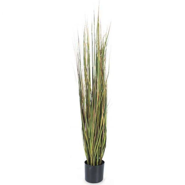 Picture of 5' Mix Green Onion Grass