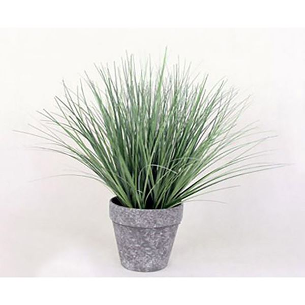 Picture of Onion Grass In Black/White Pot