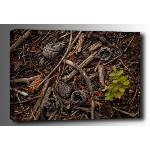 Picture of Forest Floor 24x16 *D