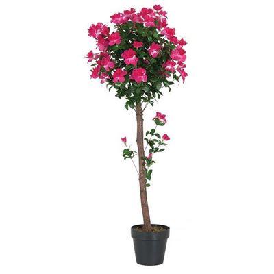 Picture of 4 ft Azalea Tree