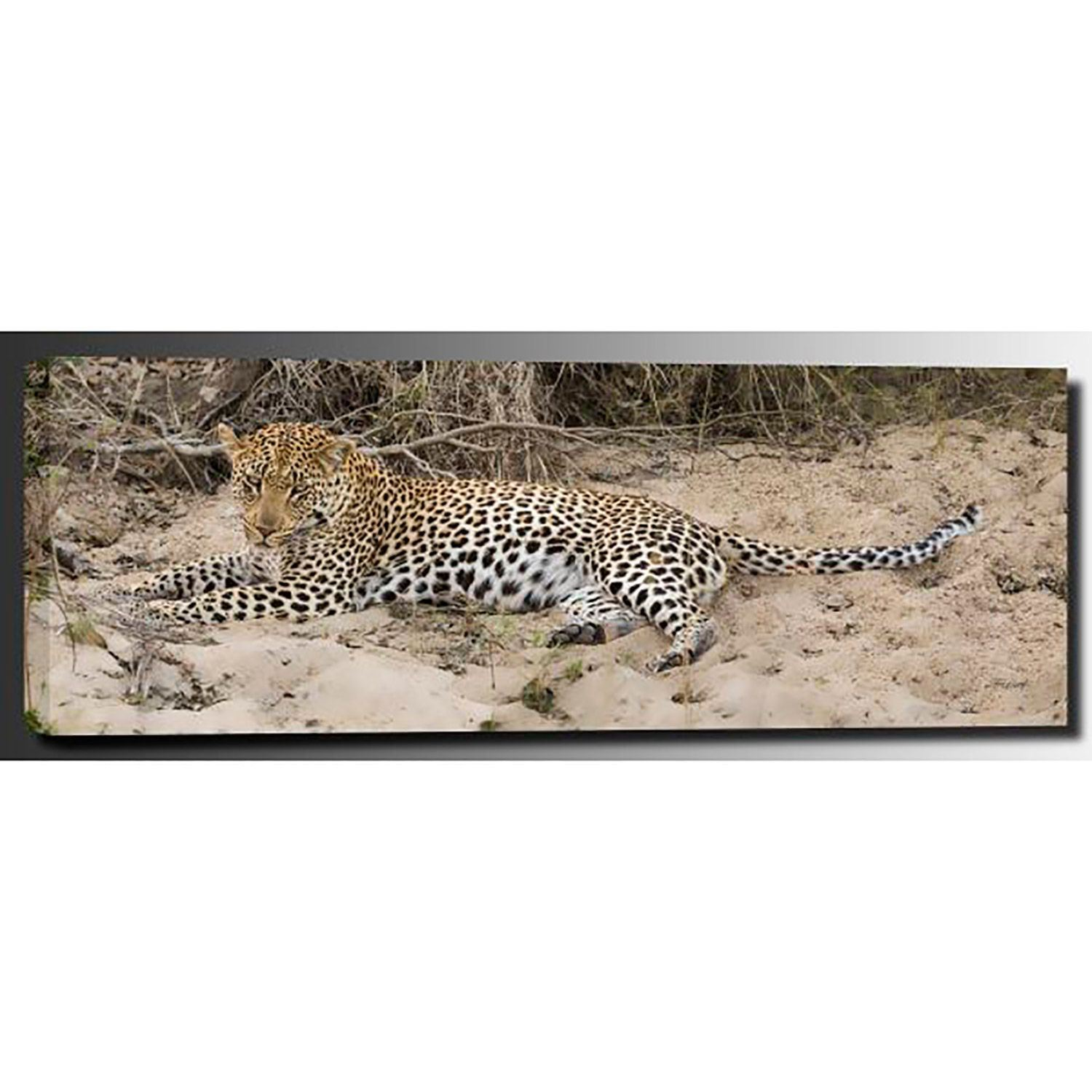 Picture of Young Brother Leopard 60x20 *D