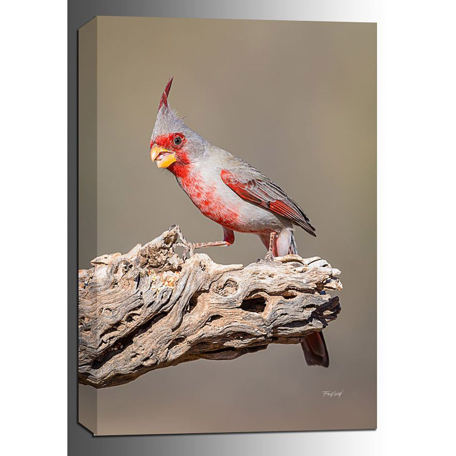 Picture of Desert Cardinal 24x16 *D