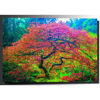 Picture of Japanese Maple 1 32x48 *D