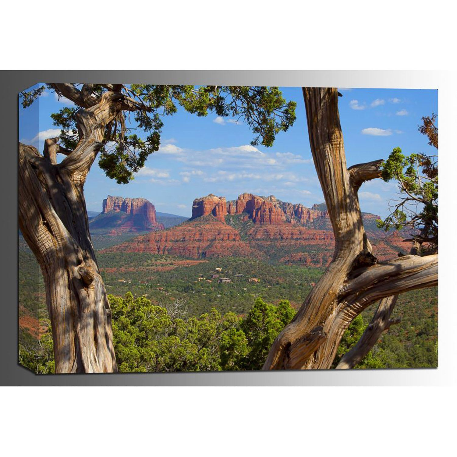 Picture of Juniper-Cathedral Rock 24x36 *D