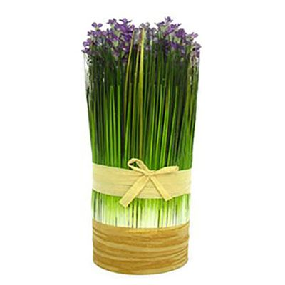 Picture of Drum Bush With Lavender