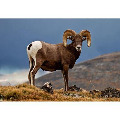 Rocky Mountain Wild 36x24