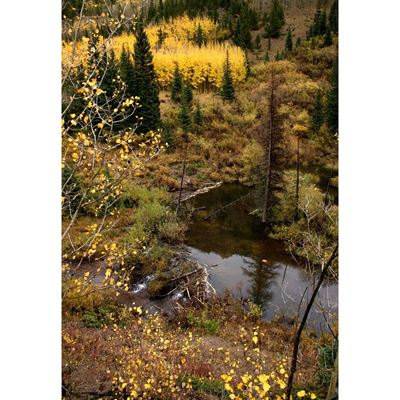 Fall in the Colorado Rockies 24x36