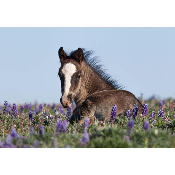 Foal in the Flowers 36x24