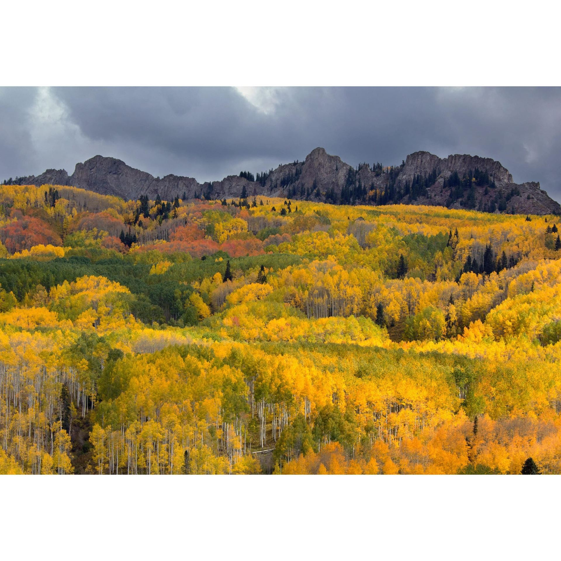 Picture of Kebler Pass 36x24 *D