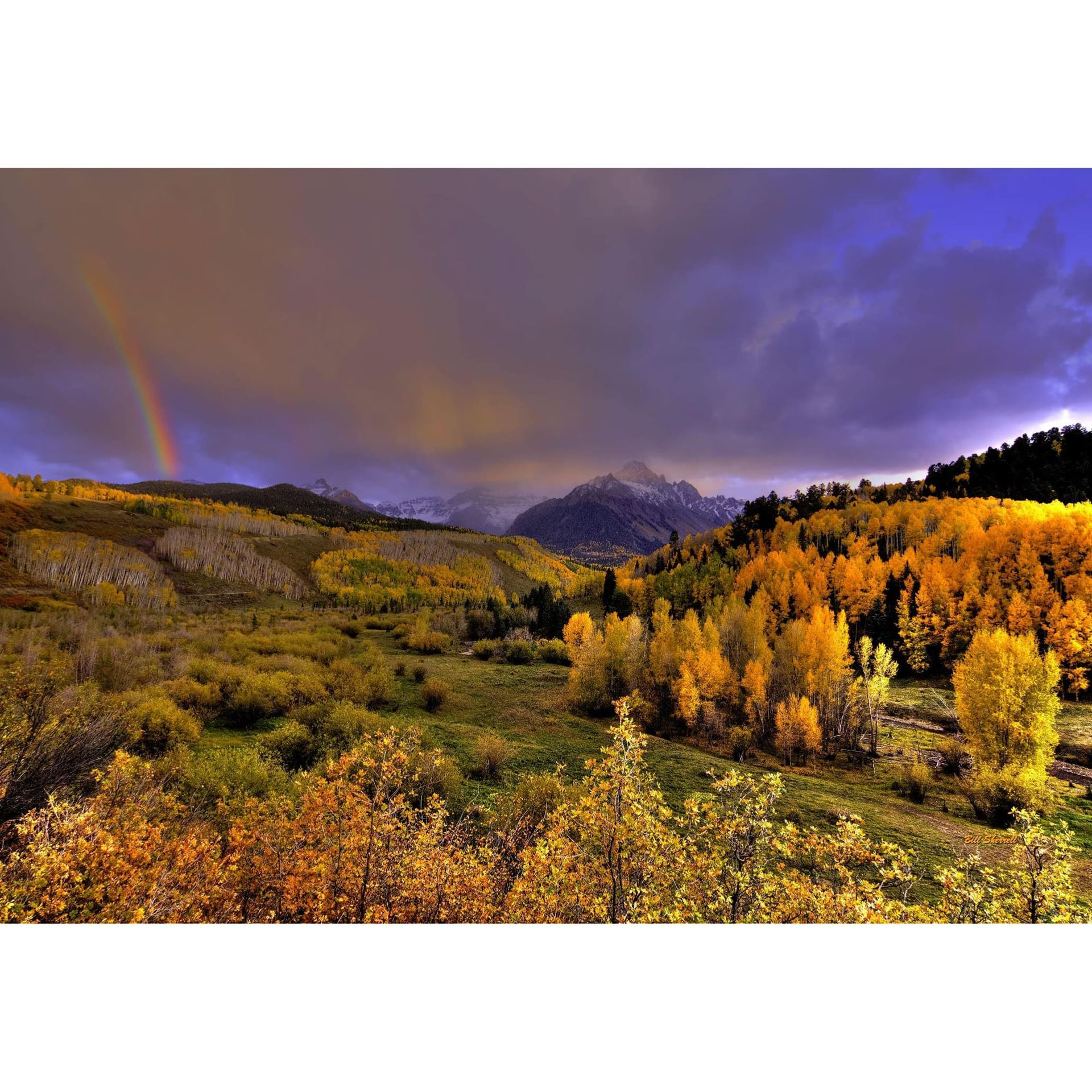 Real Gold of Colorado 36x24