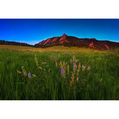Glowing Flatirons Wildflowers