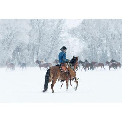 Snowy Gather 36x24